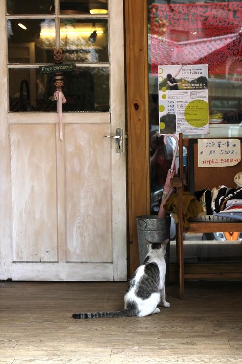 cat wants in