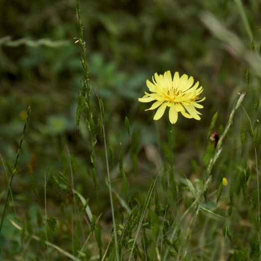 projector flower