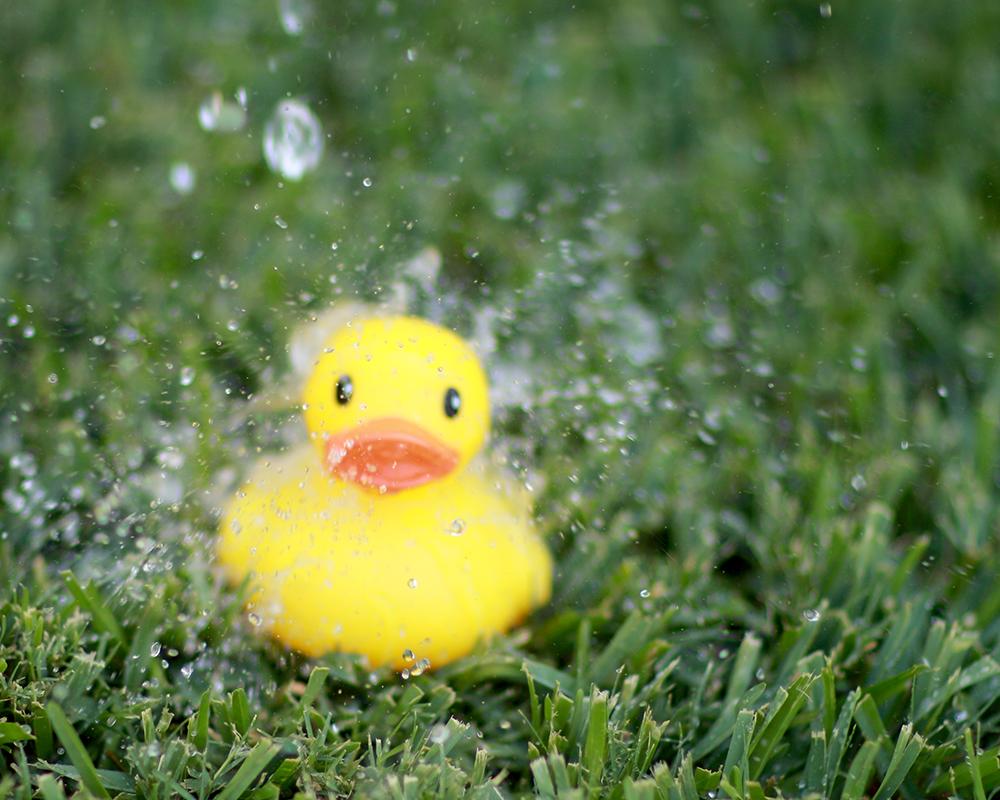 Ducky SS